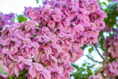Appartements VILLA JULIJA II, Korčula, Croatie - photo 7