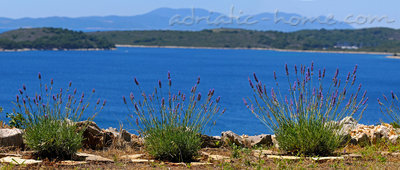 Appartamenti Avelini house Apartment B, Hvar, Croazia - foto 10